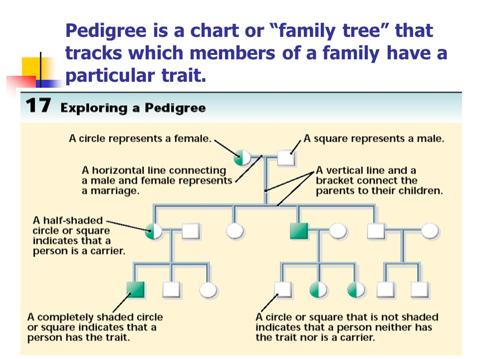 """Pedigree is a chart or """"family tree"""" that tracks which members of a family have a particular trait."""