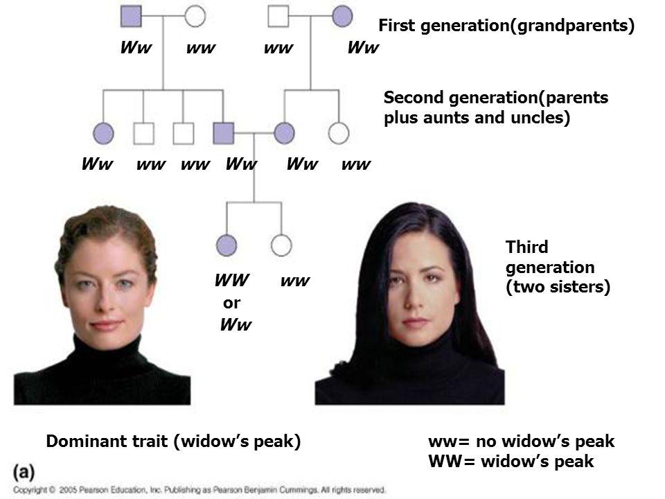 Ww ww WW or Ww First generation(grandparents) Second generation(parents plus aunts and uncles) Third generation (two sisters) ww= no widow's peak WW=