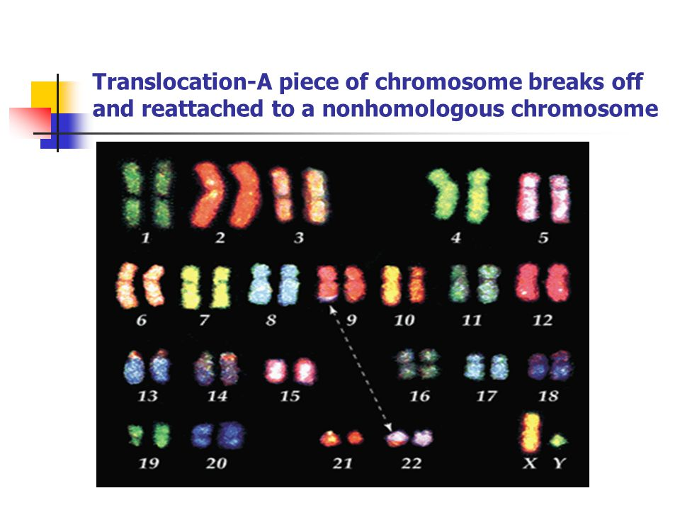 Translocation-A piece of chromosome breaks off and reattached to a nonhomologous chromosome