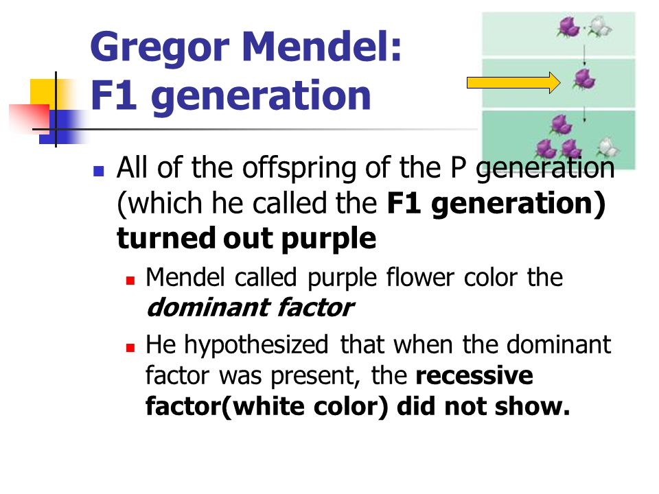 What were Mendel's factors in reality.