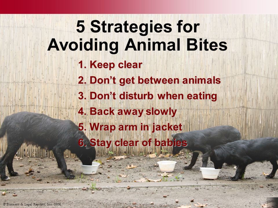 © Business & Legal Reports, Inc. 0906 5 Strategies for Avoiding Animal Bites 1.