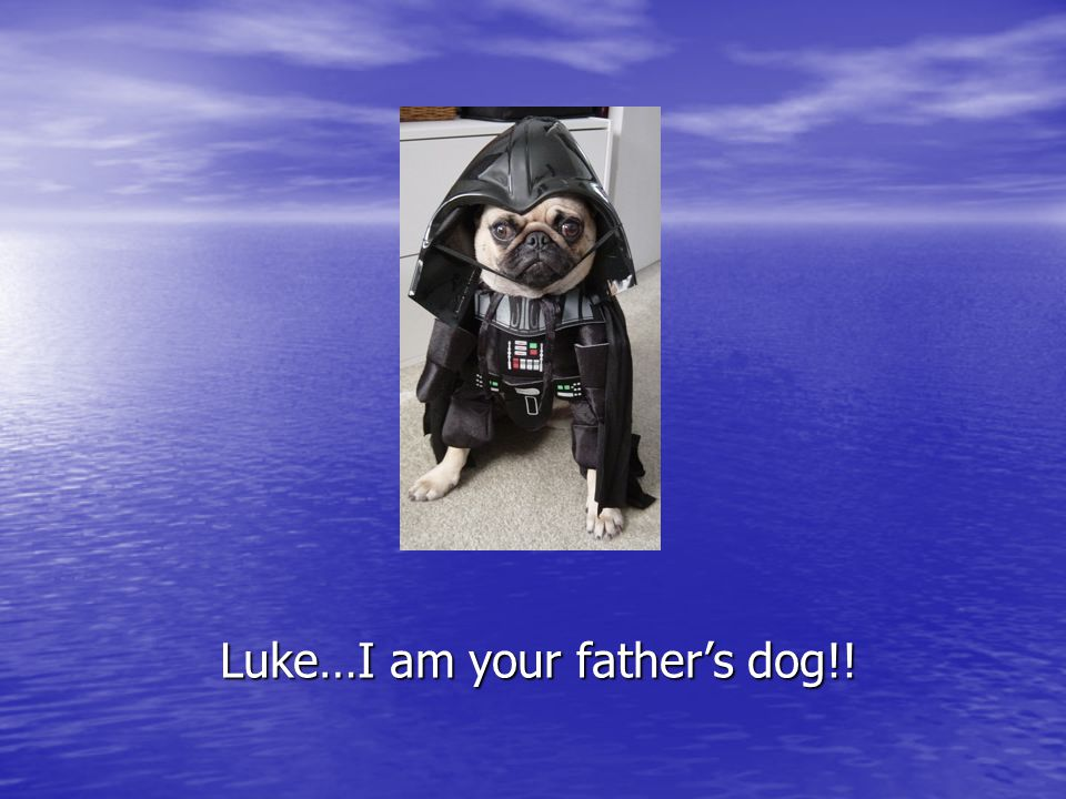 Luke…I am your father's dog!!