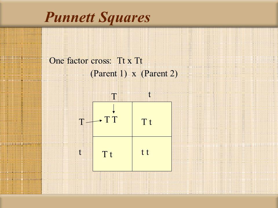 Punnett Squares One factor cross: Tt x Tt (Parent 1) x (Parent 2) T t T t T t t t T t