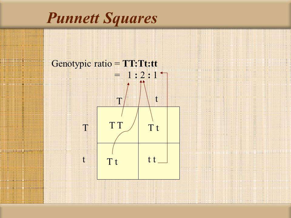 Punnett Squares One factor cross: Tt x Tt (Parent 1) x (Parent 2) T t T t T t t t T t T