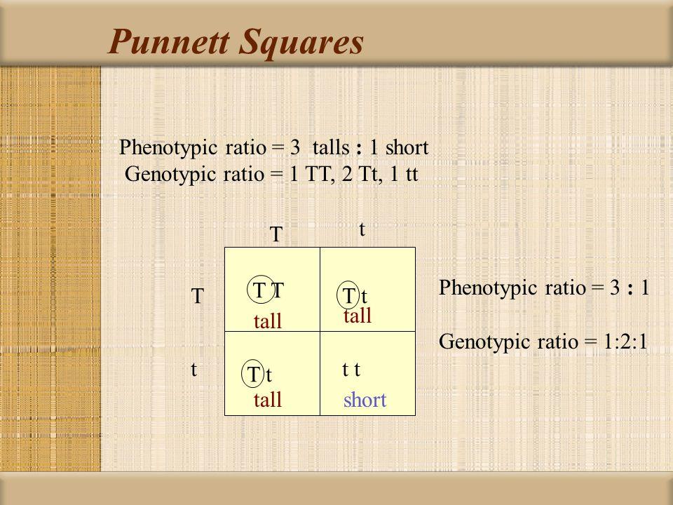 Punnett Squares Genotypic ratio = TT:Tt:tt = 1 : 2 : 1 T t T t T t t t T t T