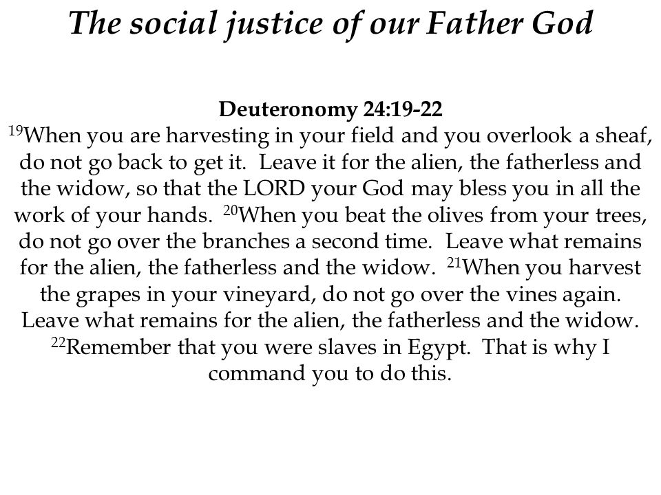 The social justice of our Father God Deuteronomy 24:19-22 19 When you are harvesting in your field and you overlook a sheaf, do not go back to get it.