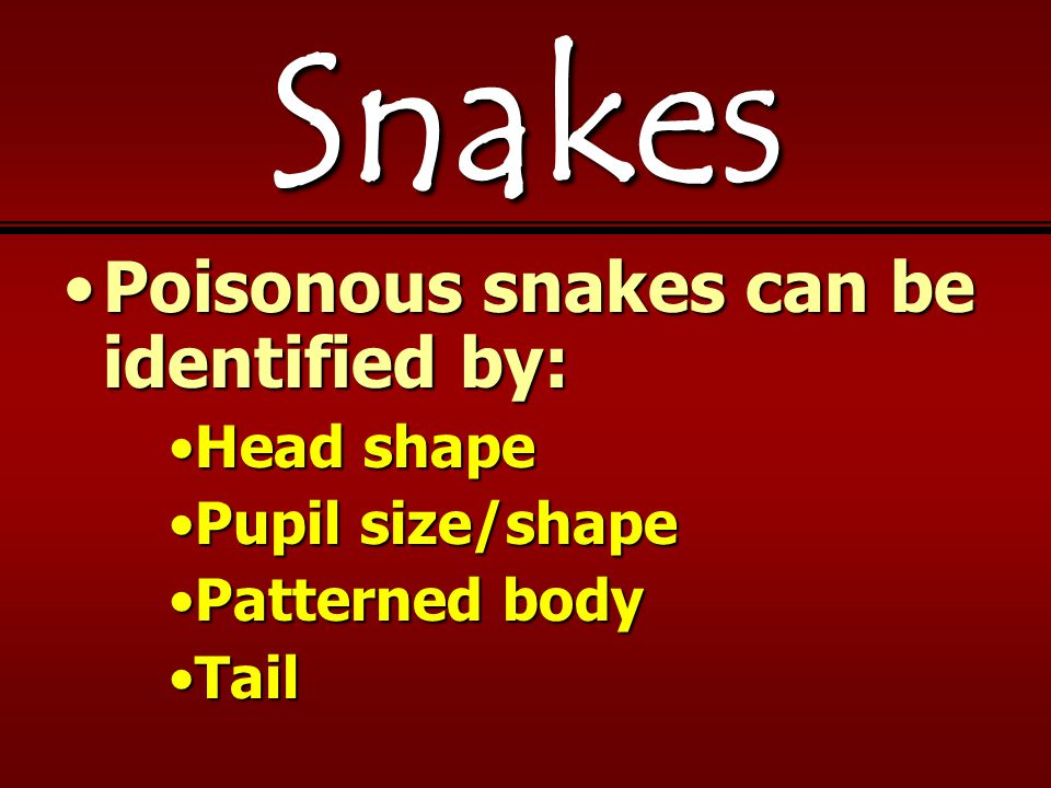 Snakes Poisonous snakes can be identified by:Poisonous snakes can be identified by: Head shapeHead shape Pupil size/shapePupil size/shape Patterned bodyPatterned body TailTail