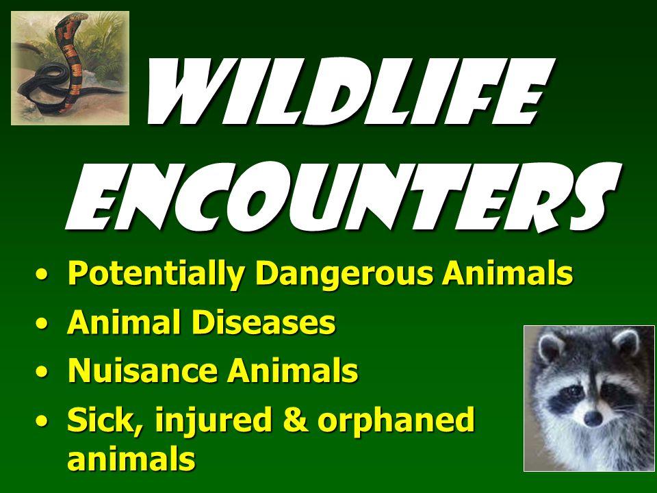 Wildlife Encounters Potentially Dangerous AnimalsPotentially Dangerous Animals Animal DiseasesAnimal Diseases Nuisance AnimalsNuisance Animals Sick, injured & orphaned animalsSick, injured & orphaned animals