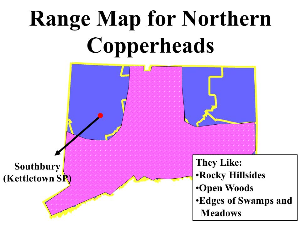 Range Map for Northern Copperheads They Like: Rocky Hillsides Open Woods Edges of Swamps and Meadows Southbury (Kettletown SP)