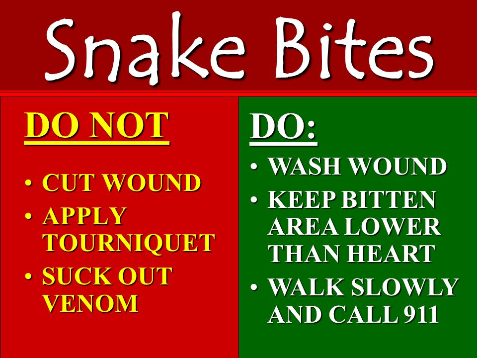 DO NOT CUT WOUNDCUT WOUND APPLY TOURNIQUETAPPLY TOURNIQUET SUCK OUT VENOMSUCK OUT VENOM Snake Bites DO: WASH WOUNDWASH WOUND KEEP BITTEN AREA LOWER THAN HEARTKEEP BITTEN AREA LOWER THAN HEART WALK SLOWLY AND CALL 911WALK SLOWLY AND CALL 911
