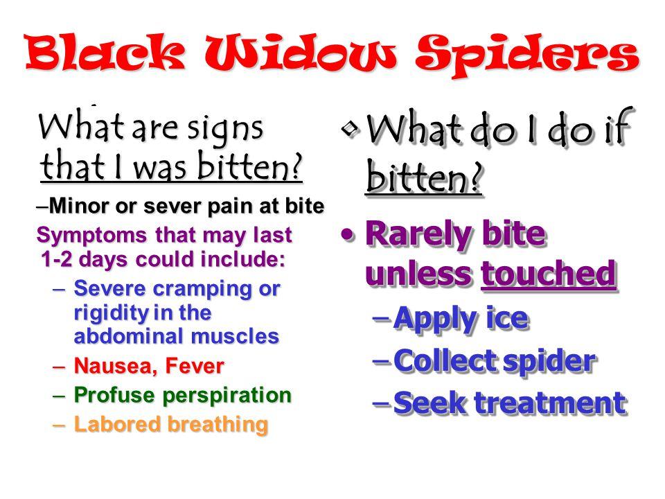 Black Widow Spiders What do I do if bitten?What do I do if bitten.