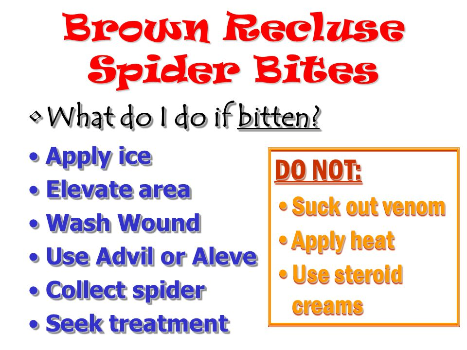 Brown Recluse Spider Bites DO NOT: Suck out venomSuck out venom Apply heatApply heat Use steroid creamsUse steroid creams DO NOT: Suck out venomSuck out venom Apply heatApply heat Use steroid creamsUse steroid creams What do I do if bitten?What do I do if bitten.