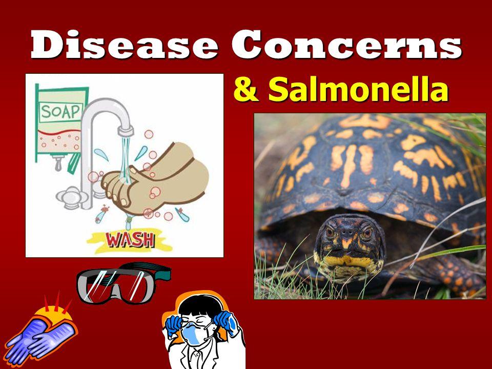 Disease Concerns Hantavirus & Salmonella