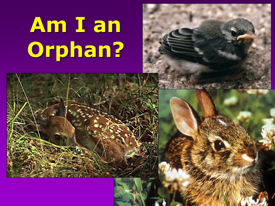 Am I an Orphan?