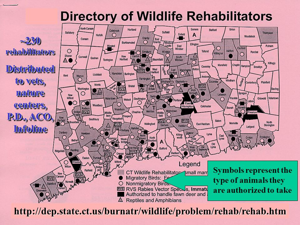 ~230 rehabilitators Distributed to vets, nature centers, P.D., ACO, Infoline ~230 rehabilitators Distributed to vets, nature centers, P.D., ACO, Infol