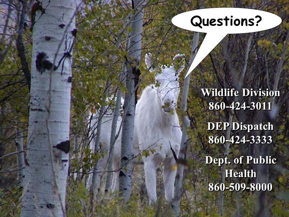 Questions. Wildlife Division 860-424-3011 DEP Dispatch 860-424-3333 Dept.