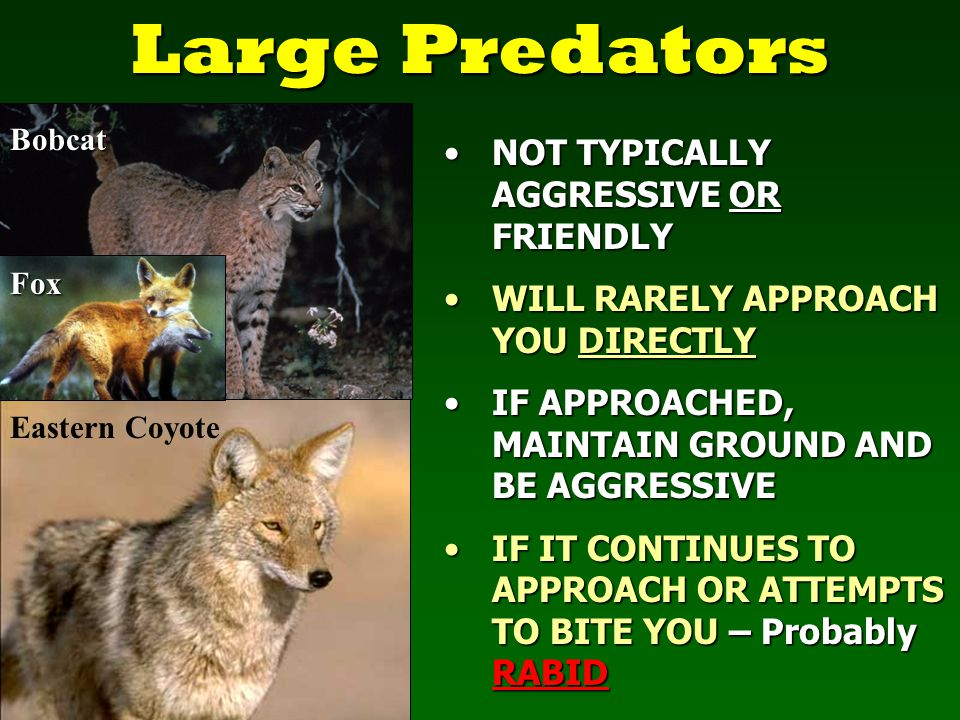 Nuisance Animals