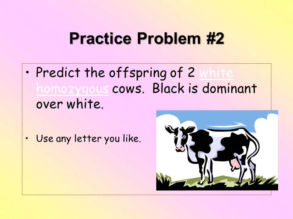 Practice Problem #2 Predict the offspring of 2 white homozygous cows. Black is dominant over white. Use any letter you like.