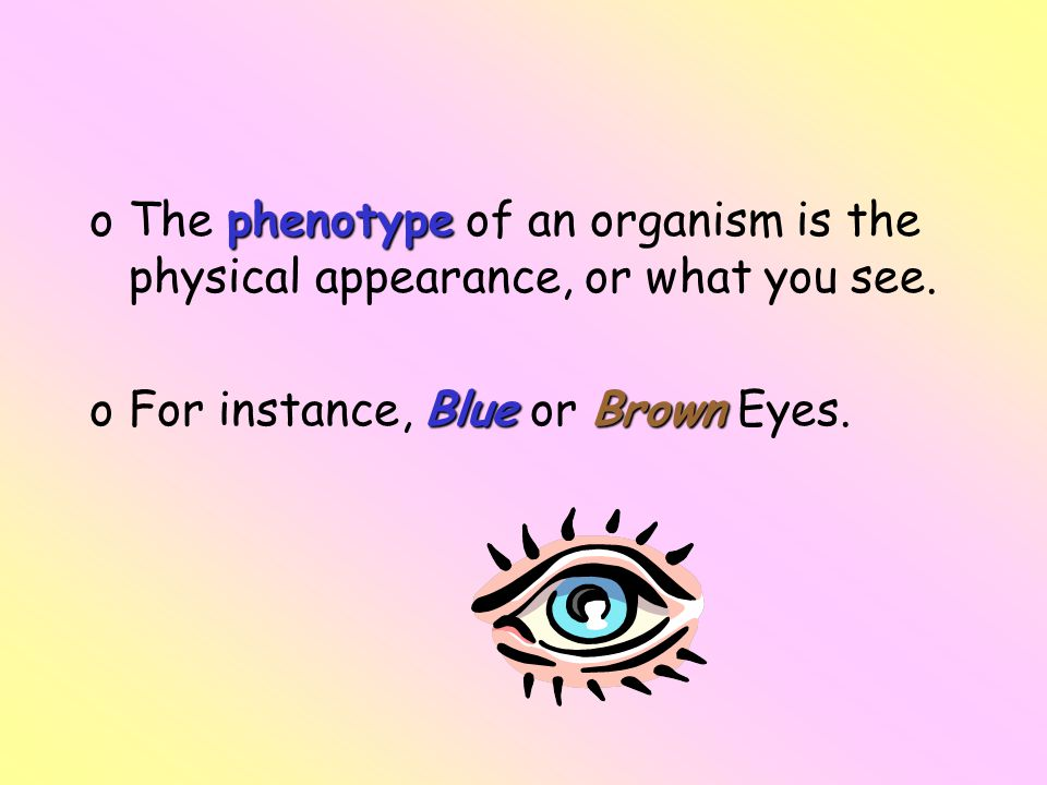 phenotype oThe phenotype of an organism is the physical appearance, or what you see. BlueBrown oFor instance, Blue or Brown Eyes.