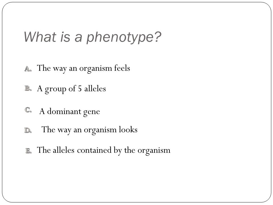What is a phenotype? The alleles contained by the organism The way an organism feels A dominant gene A group of 5 alleles The way an organism looks