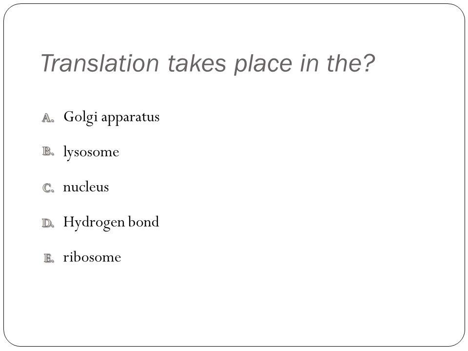 Translation takes place in the nucleus Hydrogen bond Golgi apparatus lysosome ribosome