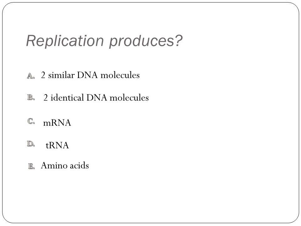 Replication produces? Amino acids 2 similar DNA molecules mRNA tRNA 2 identical DNA molecules