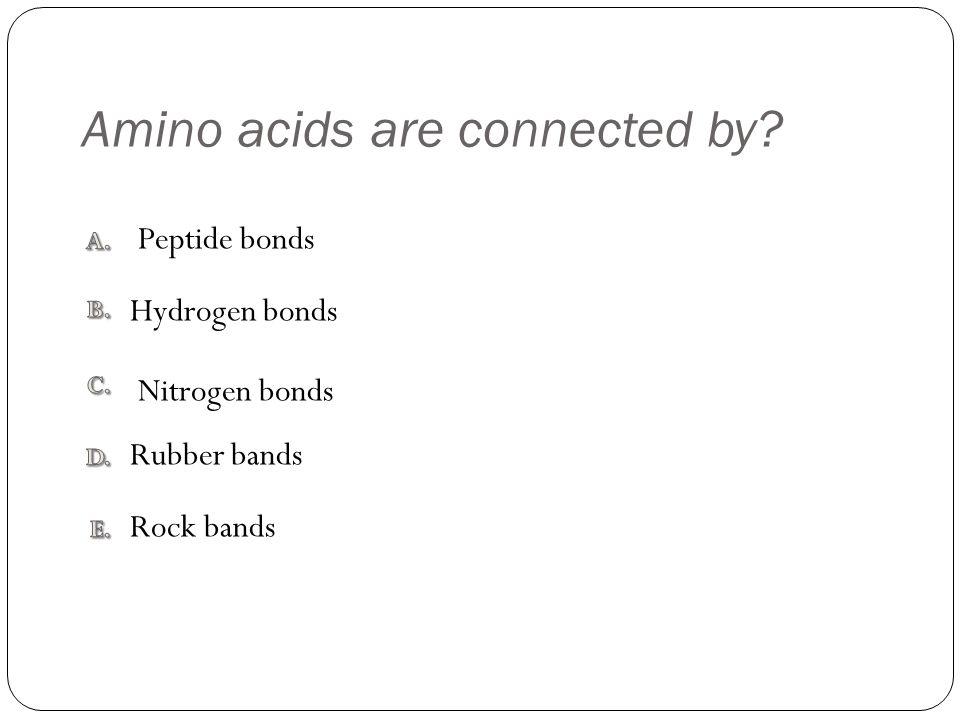 Amino acids are connected by Rock bands Rubber bands Nitrogen bonds Hydrogen bonds Peptide bonds