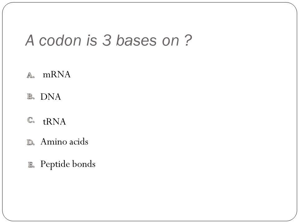 A codon is 3 bases on Peptide bonds Amino acids tRNA DNA mRNA