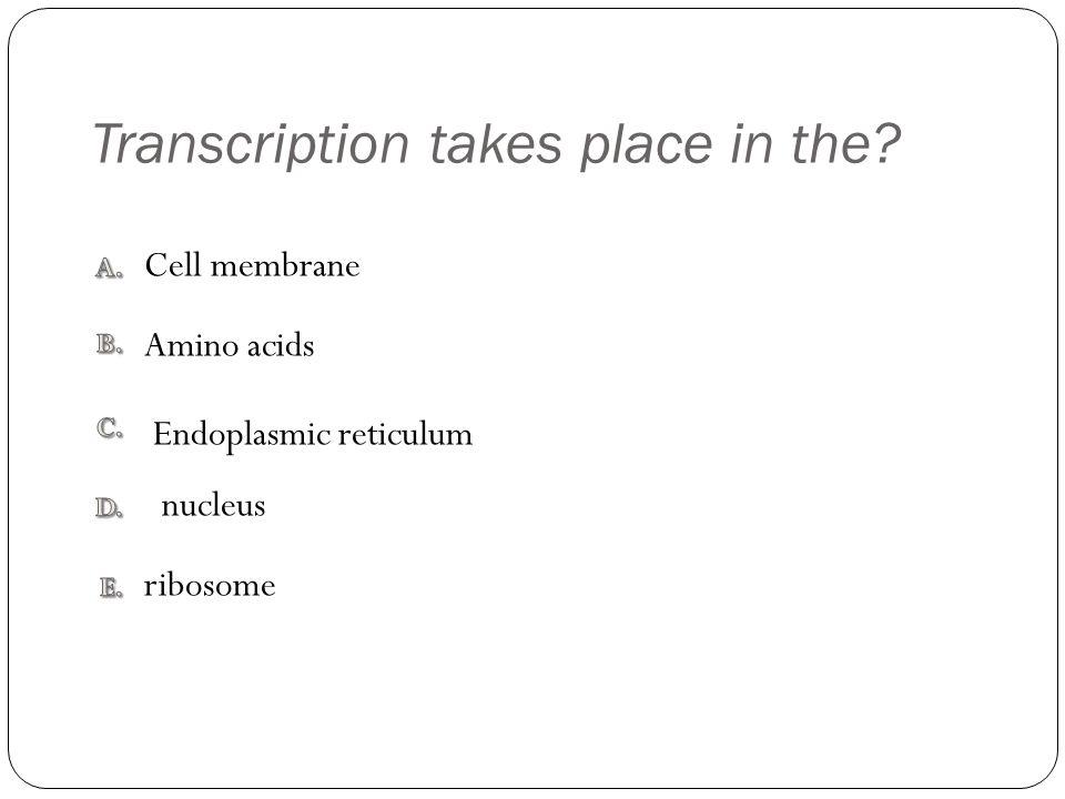 Transcription takes place in the ribosome Cell membrane Endoplasmic reticulum Amino acids nucleus