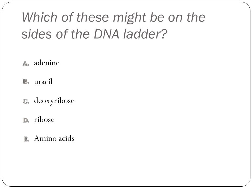 Which of these might be on the sides of the DNA ladder? Amino acids ribose adenine uracil deoxyribose