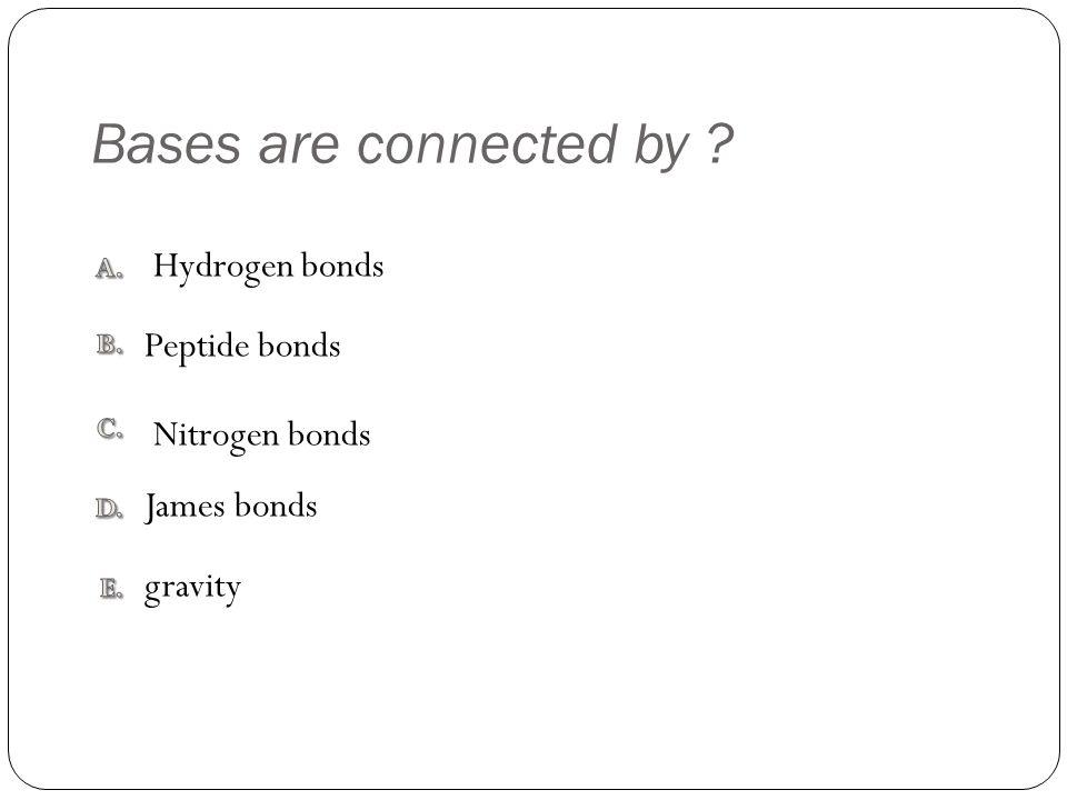 Bases are connected by gravity James bonds Nitrogen bonds Peptide bonds Hydrogen bonds