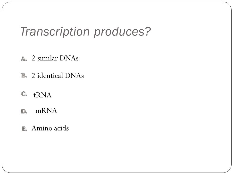 Transcription produces? Amino acids 2 similar DNAs tRNA 2 identical DNAs mRNA