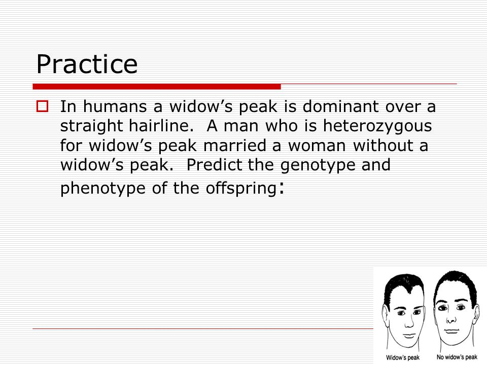 Practice  In humans a widow's peak is dominant over a straight hairline. A man who is heterozygous for widow's peak married a woman without a widow's
