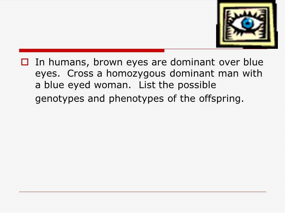  In humans, brown eyes are dominant over blue eyes. Cross a homozygous dominant man with a blue eyed woman. List the possible genotypes and phenotype