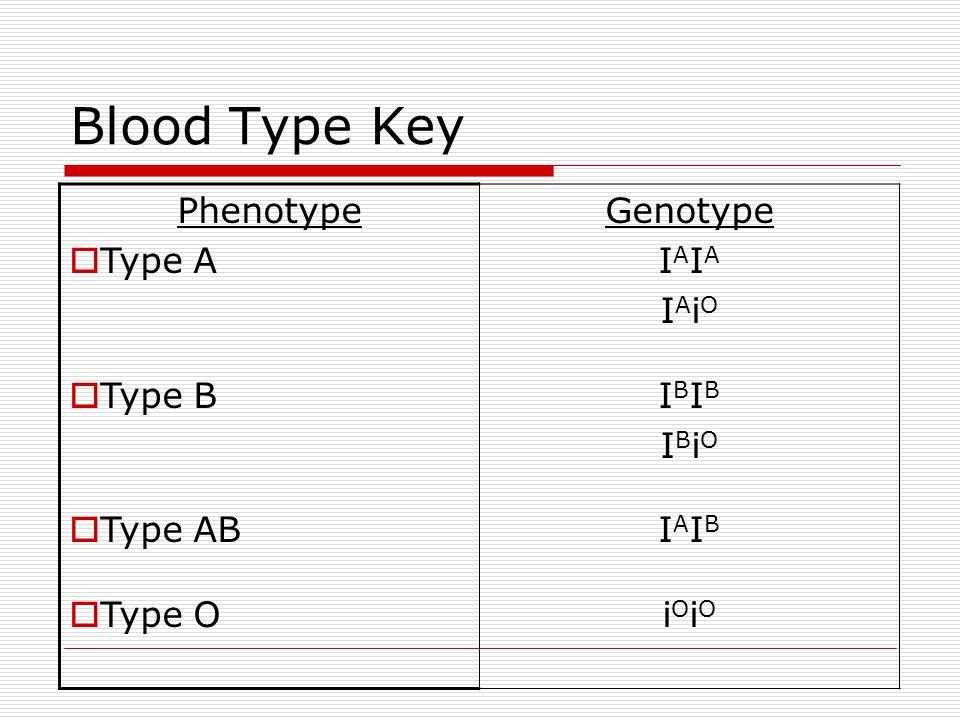 Blood Type Key Phenotype  Type A  Type B  Type AB  Type O Genotype I A I A i O I B I B i O I A I B i O