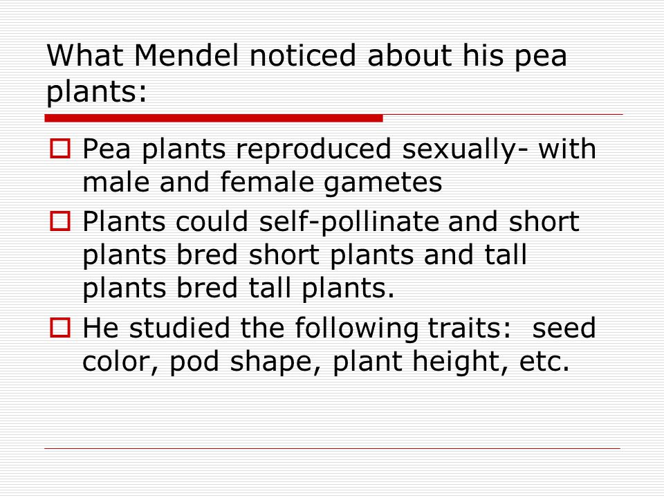  Pea plants reproduced sexually- with male and female gametes  Plants could self-pollinate and short plants bred short plants and tall plants bred t