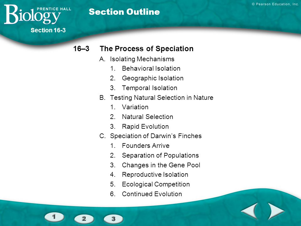 Section Outline 16–3The Process of Speciation A.Isolating Mechanisms 1.Behavioral Isolation 2.Geographic Isolation 3.Temporal Isolation B.Testing Natu
