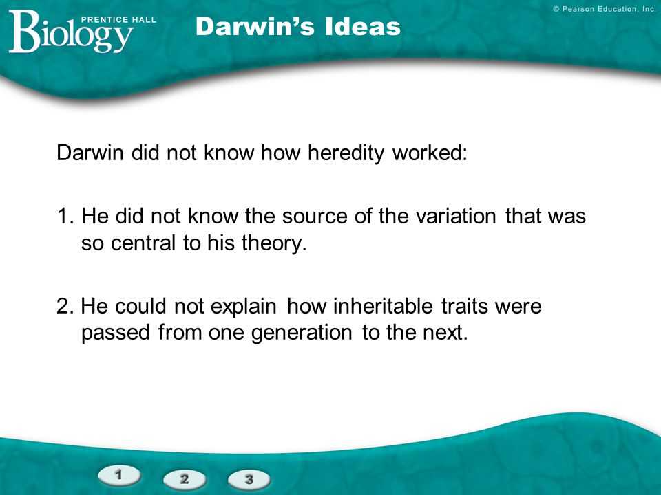 Darwin's Ideas Darwin did not know how heredity worked: 1.He did not know the source of the variation that was so central to his theory. 2. He could n