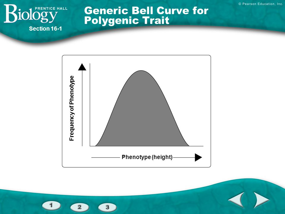 Frequency of Phenotype Phenotype (height) Generic Bell Curve for Polygenic Trait Section 16-1