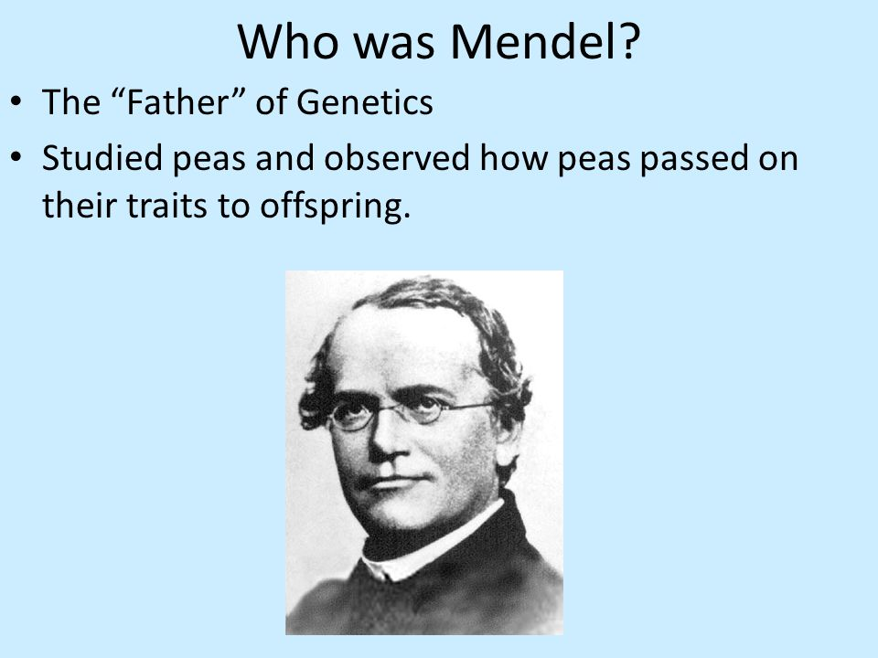 Who was Mendel.