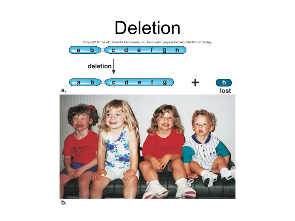 Duplication results in a chromosome segment being repeated in the same chromosome or in a nonhomologous chromosome, producing extra alleles for a trait.