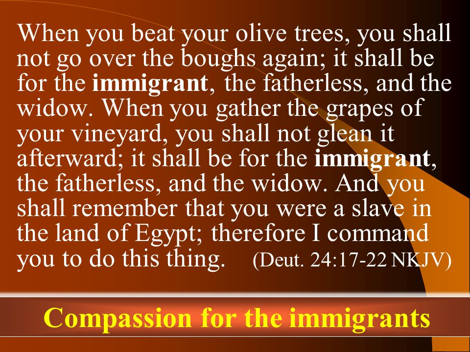 When you beat your olive trees, you shall not go over the boughs again; it shall be for the immigrant, the fatherless, and the widow.