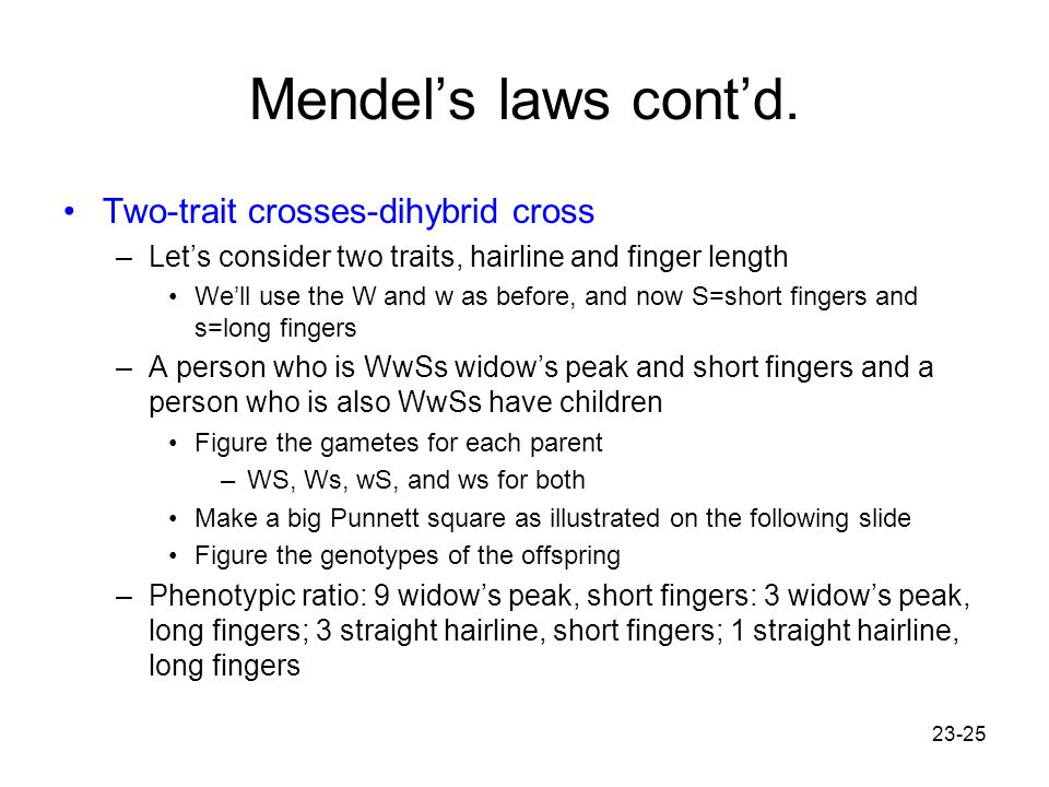 23-25 Mendel's laws cont'd. Two-trait crosses-dihybrid cross –Let's consider two traits, hairline and finger length We'll use the W and w as before, a