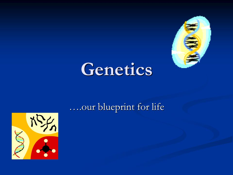Genetics ….our blueprint for life
