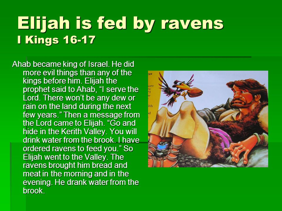 Elijah is fed by ravens I Kings 16-17 Ahab became king of Israel.