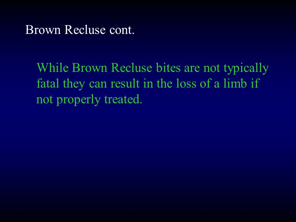 Brown Recluse cont.
