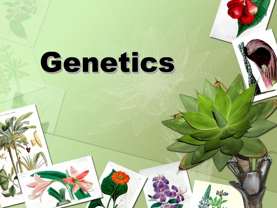 GeneticsGenetics