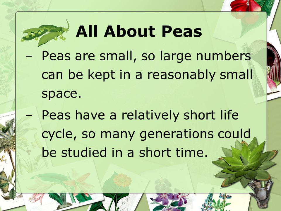 All About Peas –Peas are small, so large numbers can be kept in a reasonably small space. –Peas have a relatively short life cycle, so many generation