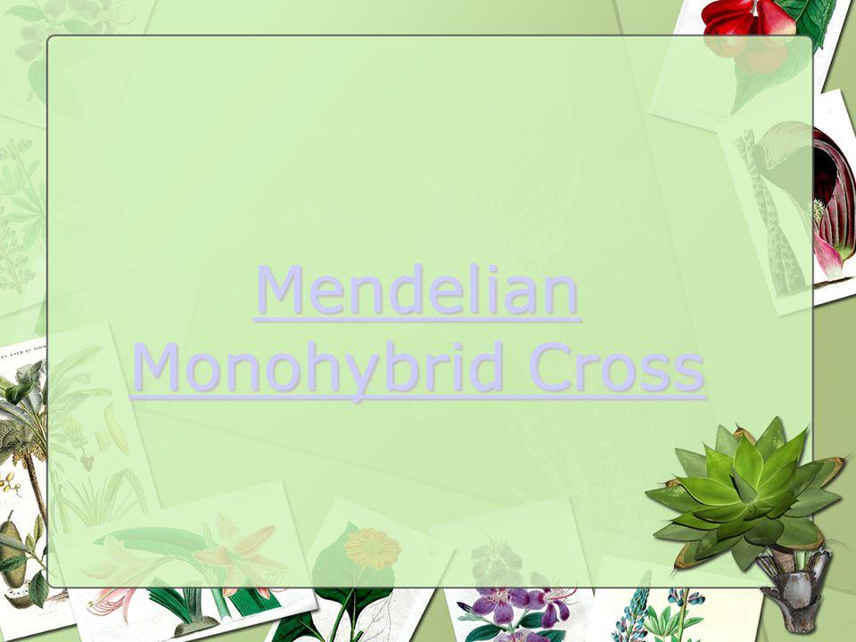 Mendelian Monohybrid Cross Mendelian Monohybrid Cross