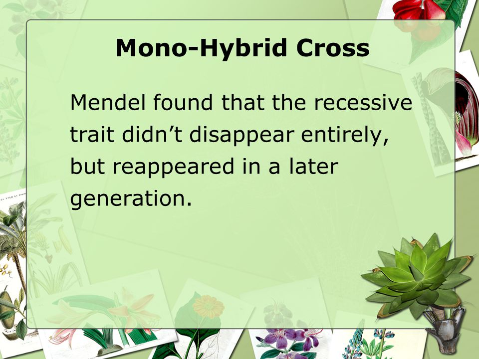 Mendel found that the recessive trait didn't disappear entirely, but reappeared in a later generation.